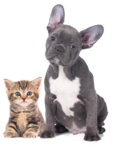 Hound-and-Purr-Pet-Grooming-Toronto