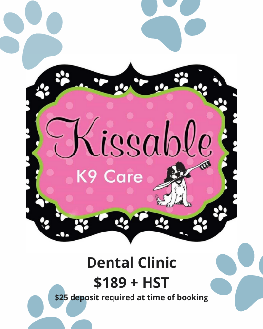 Kissable K9 Dental Clinic at Hound and Purr