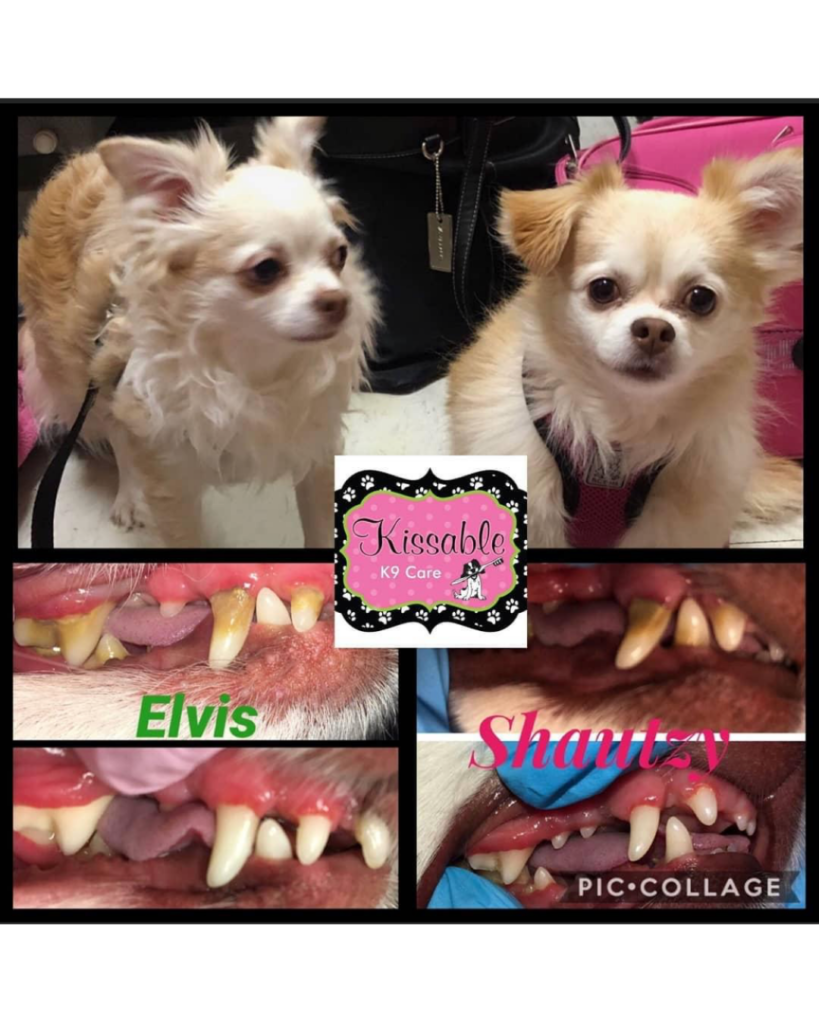 before and after Kissable K9 Care